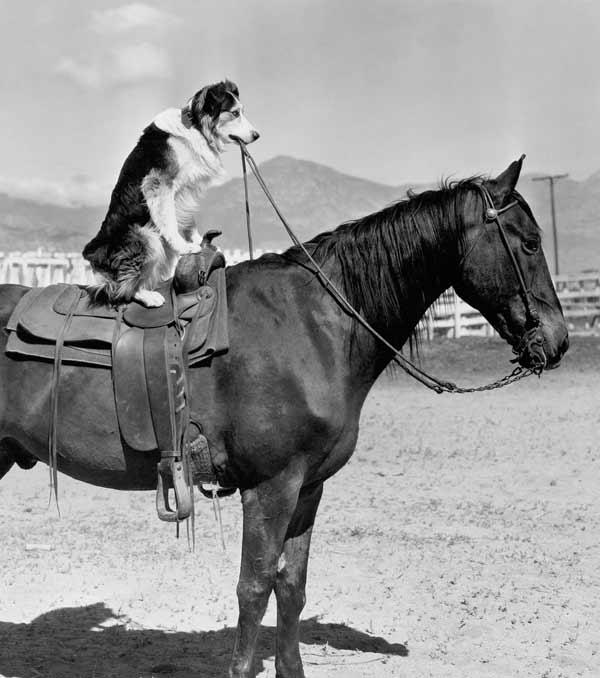 Ein Hund reitet auf einem Pferd. Wir haben gute Ideen und machen gute Werbung