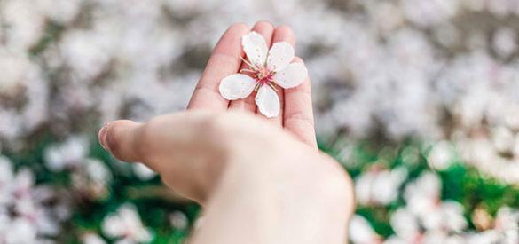 Eine Hand hält eine Blüte.