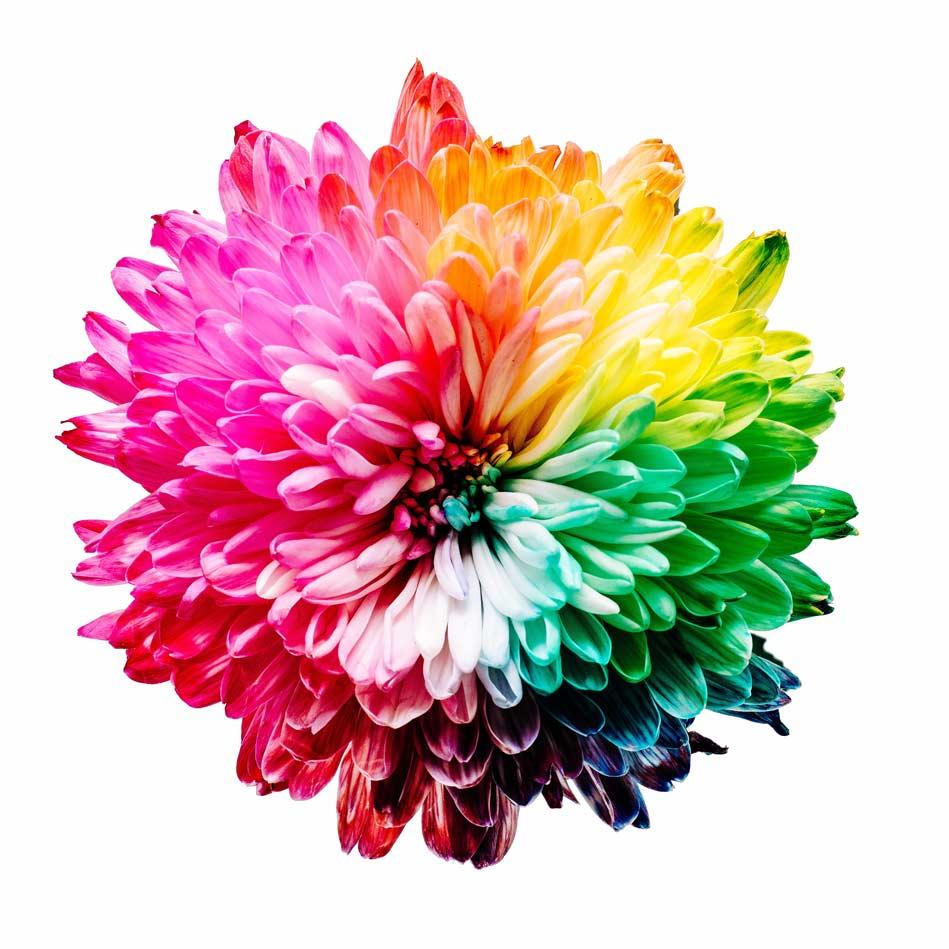 Blume in verschiedenen Farben